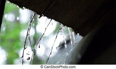 Heavy rain in summer wood