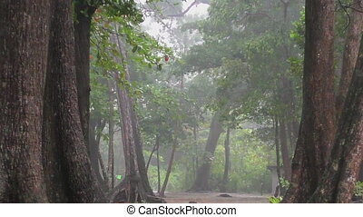 Heavy rain in the rainforest