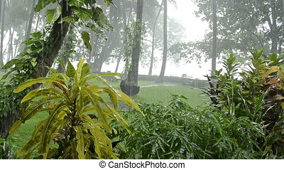 heavy rain in tropical forest. rainy season. fern on a trunk...