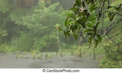Heavy Rain (Rainforest)