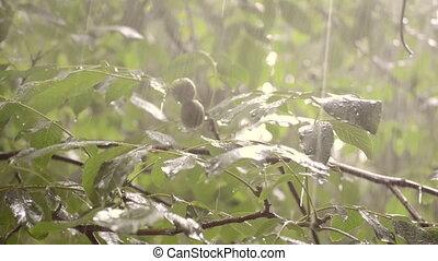Heavy rain shower downpour cloudburst rainfall comes in the ...