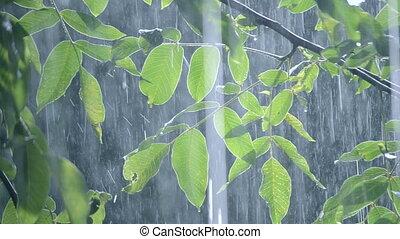 Heavy rain shower downpour cloudburst rainfall comes in the daytime.