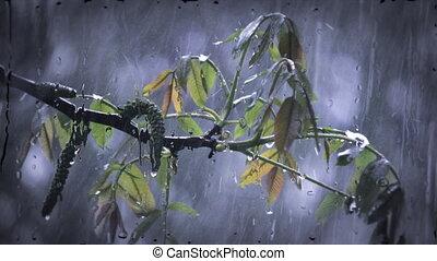 Heavy rain shower downpour cloudburst rainfall. - Heavy rain...