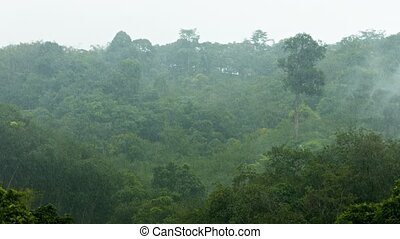 Heavy Rain Storm on Jungle Mountainside in Southern Thailand