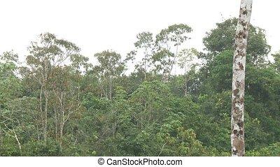 Heavy Rainfall, Southamerica