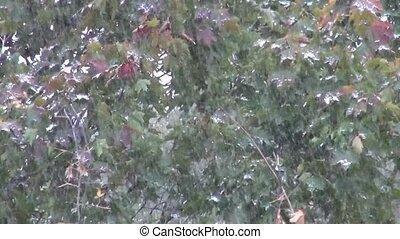 Heavy snow fall
