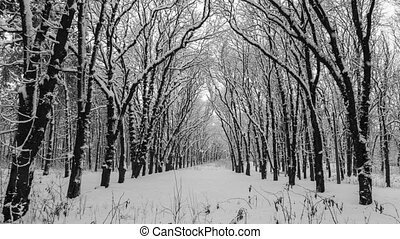 Heavy snow falling in a forest in winter time.