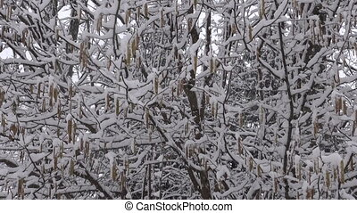 Heavy snow falling in forest