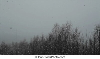 Heavy snow falling in wooded area