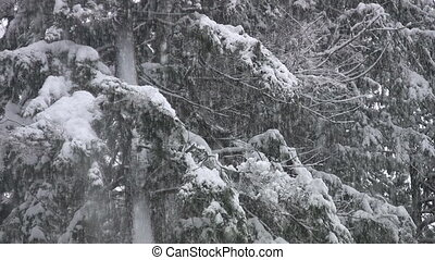 Heavy snow falling on forest tree.
