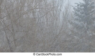 Heavy snow falls, snowstorm on background of trees