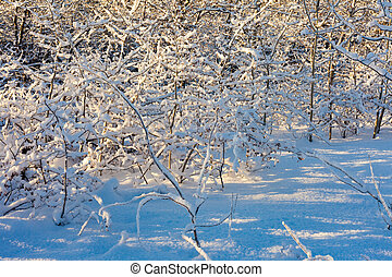 Heavy snow on every branch - Heavy snow load on every branch...