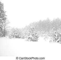heavy snowfall in the forest