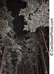 snowfall in the night pine forest