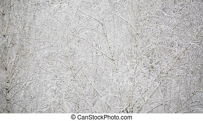 heavy snowfall on the background of snowy birch trees