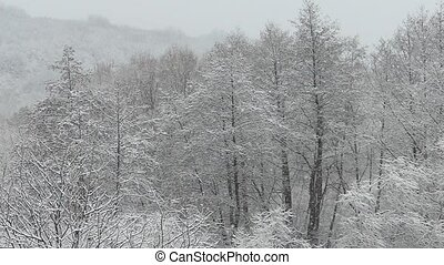 Heavy snowfall. Snow-covered forest in winter. Flying...