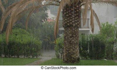Heavy summer rain pouring - Neighbourhood and green garden...