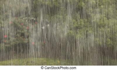 heavy tropical rain