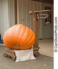 Heavyweight - A large pumpkin being weighed on an antique...