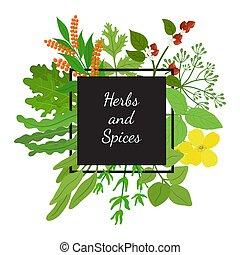 Hebs, spices - arugula, mustard, matcha, basil, thyme, ...