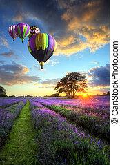 hed luft ballon, flyve hen, lavendel, landskab, solnedgang