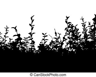 Black uncut hedge over white background