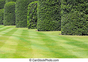 Cultivated lawn and tall green plants hedge