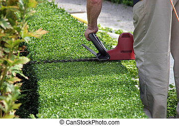 Hedge being cut by a man holding a red electric hedge cutter.