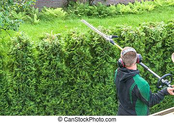 Hedge cutting petrol hedge trimmer.
