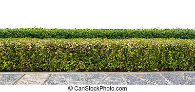 hedge on isolated
