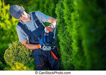 Hedge Trimmer Works. Gardener with Gasoline Hedge Trimmer...