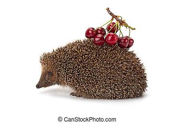 hedgehog and a sprig of cherry
