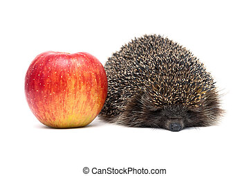 hedgehog and red ripe apple on a white background
