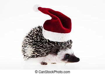 Hedgehog christmas - A hedgehog is any of the small spiny ...