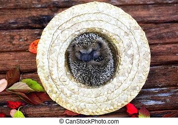 hedgehog in a straw hat autumn