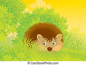 Hedgehog in grass on skirts of a wood