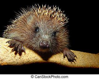 Hedgehog - The foto of the pretty hedgehog. flash