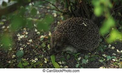 Hedgehog with couple of wedding rings on needles