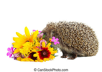 Hedgehog with flowers - Little needle hedgehog with bouquet ...