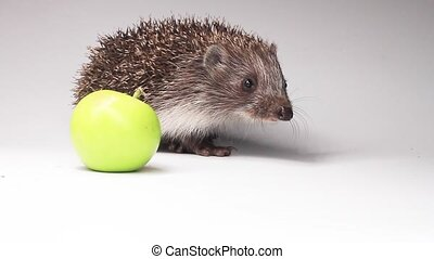 hedgehog with green apple on white background, the animals