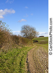hedgerow and wheat - a curving winter hedgerow beside a...