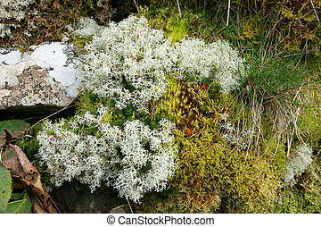 Hedgerow Beauty - Moss, lichens and grasses in a hedgerow in...