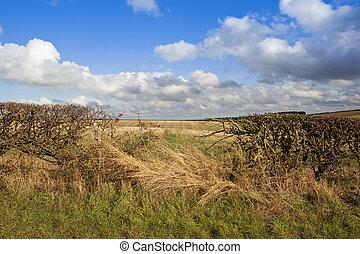 hedgerow, en, otoño