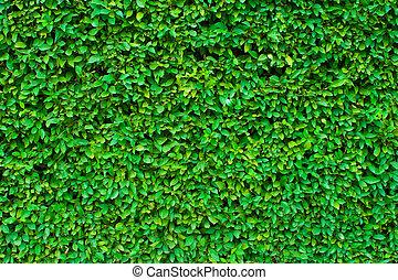 hedgerow, experiência verde