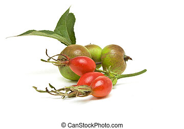 Hedgerow Fruit of vibrant red rosehips and green crabapples.