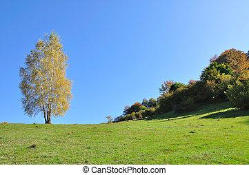 hegy, ősz parkosít, noha, színes, erdő
