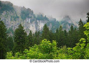 hegy, közé, gyönyörű, erdő