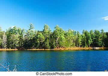 hegy, nemzeti, hampshire, erdő, új, tavacska, fehér