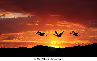 hegyek, felett, repülés, napnyugta, madarak