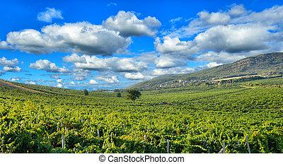 hegyek, szőlőskert